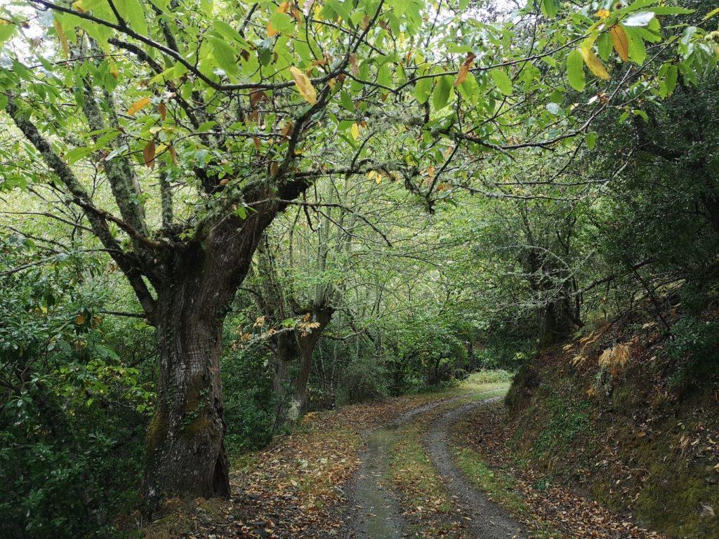 QUIROGA – A POBRA DO BROLLÓN (24 KM)